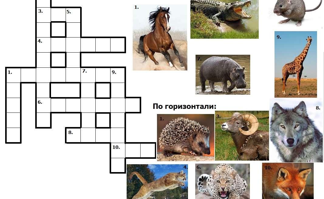 Английский кроссворд Животные
