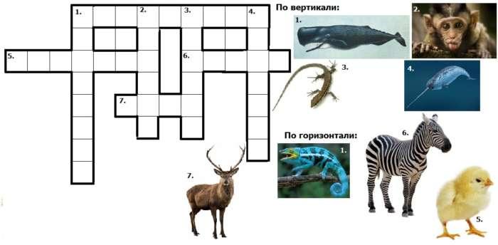 Кроссворд животные на английском языке с ответами