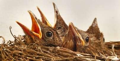 Кроссворд про птиц