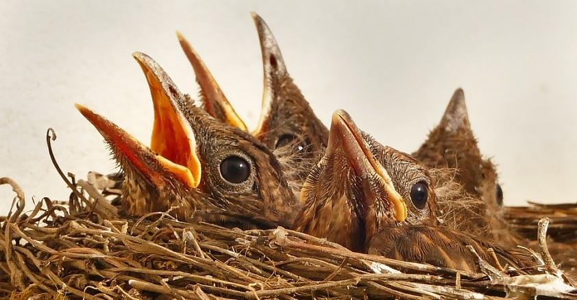 Кроссворд птицы
