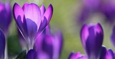 Кроссворд на тему «Весна»