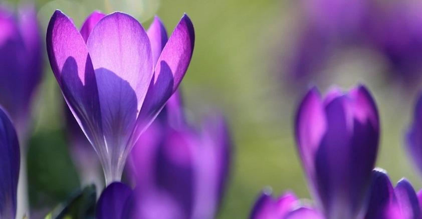 Кроссворд весна